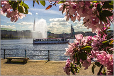 Autocolante decorativo  Cherry on the Alster in Hamburg for Spring - Dennis Stracke
