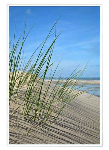 Póster Premium Dune grasses before playscape