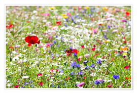 Póster Premium Colorful Meadow