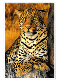 Póster Premium  Leopardo Enthroned - Dave Welling