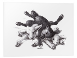 Quadro em PVC  Three Sheep - Ball Of Wood - Stefan Kahlhammer