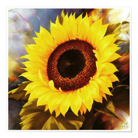 Póster Premium sunflower