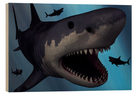 Quadro de madeira  A Megalodon shark from the Cenozoic Era - Mark Stevenson