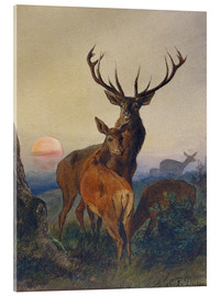 Quadro em acrílico  A Stag with Deer at Sunset - Charles Jones