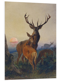 Quadro em PVC  A Stag with Deer at Sunset - Charles Jones