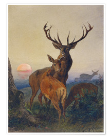 Póster Premium  A Stag with Deer at Sunset - Charles Jones