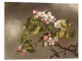 Quadro em PVC  Apple Blossoms and a Hummingbird - Martin Johnson Heade