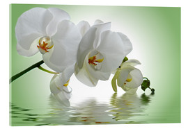 Quadro em acrílico  Orchid with Reflection - Atteloi