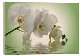 Quadro de madeira  Orchid with Reflection - Atteloi