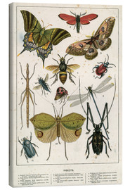 Quadro em tela  Insects - English School