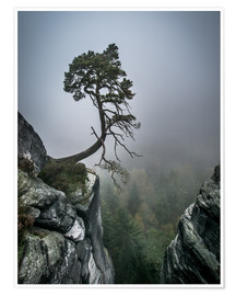 Póster Premium  Lonely Tree on the Brink - Andreas Wonisch