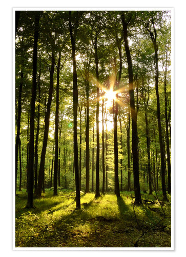 Póster Premium Forest in Sunset