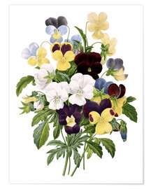Póster Premium Bouquet of Pansies