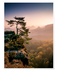 Póster Premium  Lonely Tree at Sunrise - Andreas Wonisch