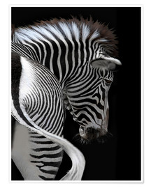 Póster Premium african stripes II