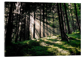 Quadro em acrílico  Light rays in the forest - Oliver Henze