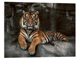 Quadro em PVC  king of the jungle - Joachim G. Pinkawa