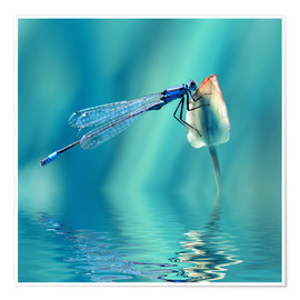 Póster Premium  Dragonfly with Reflection - Atteloi
