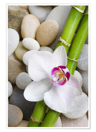 Póster Premium Bamboo and orchid