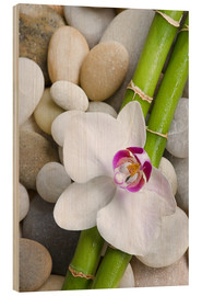 Quadro de madeira  Bamboo and orchid - Andrea Haase Foto