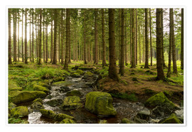 Póster Premium forest with creek