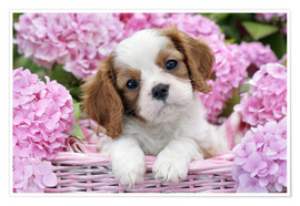 Póster Premium  Pup in Pink Flowers - Greg Cuddiford