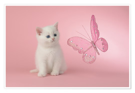 Póster Premium Kitten with Pink Butterfly