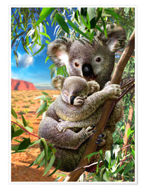 Póster Premium  Koala and cub - Adrian Chesterman