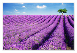Póster Premium  Lavender field and tree - Matteo Colombo