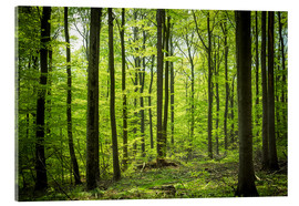 Quadro em acrílico  Fresh Green - Beech forest in Harz - Oliver Henze