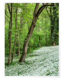 Póster Premium Forest during Spring with everything covered by Wild Garlic