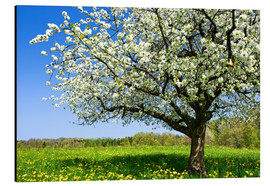 Quadro em alumínio  Blossoming trees in spring rural meadow - Peter Wey
