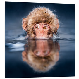 Quadro em PVC  Japanese Snow monkey bathing - Jan Christopher Becke