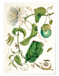 Póster Premium  Passion flower and insects - Maria Sibylla Merian