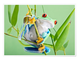 Póster Premium  Red-eyed tree frog - Linda Wright