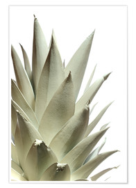 Póster Premium  White pineapple - Neal Grundy