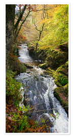 Póster Premium Lynmouth river woodland