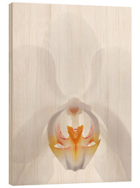 Quadro de madeira  in the throat of the Orchid - GAVIN KINGCOME