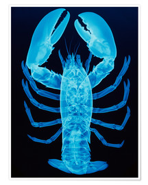 Póster Premium  X-ray of lobster - D. Roberts