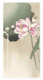 Póster Premium  Lotus Flower and Finch - Ohara Koson