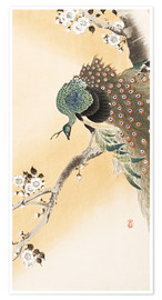 Póster Premium  A peacock in a cherry tree crown - Ohara Koson