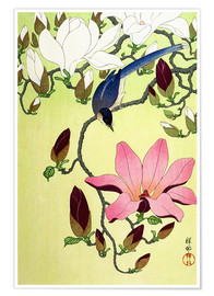 Póster Premium  Magpie with Pink and White Magnolia Blossoms - Ohara Koson