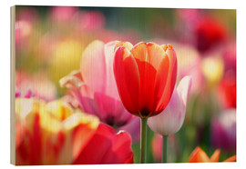 Quadro de madeira  Beautiful colorful Tulips - Lichtspielart