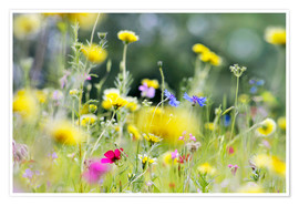 Póster Premium Summer Meadow with blooming wild Flowers