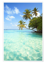 Póster Premium  Turquoise sea and palm trees, Maldives - Matteo Colombo