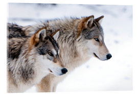 Quadro em acrílico  Two Wolves in the snow - Louise Murray