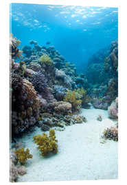 Quadro em acrílico  Coral reef in blue water - Mark Doherty