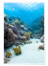 Póster Premium  Coral reef in blue water - Mark Doherty