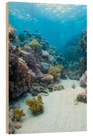 Quadro de madeira  Coral reef in blue water - Mark Doherty