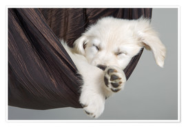 Póster Premium Sweet Dreams Golden Retriever 2